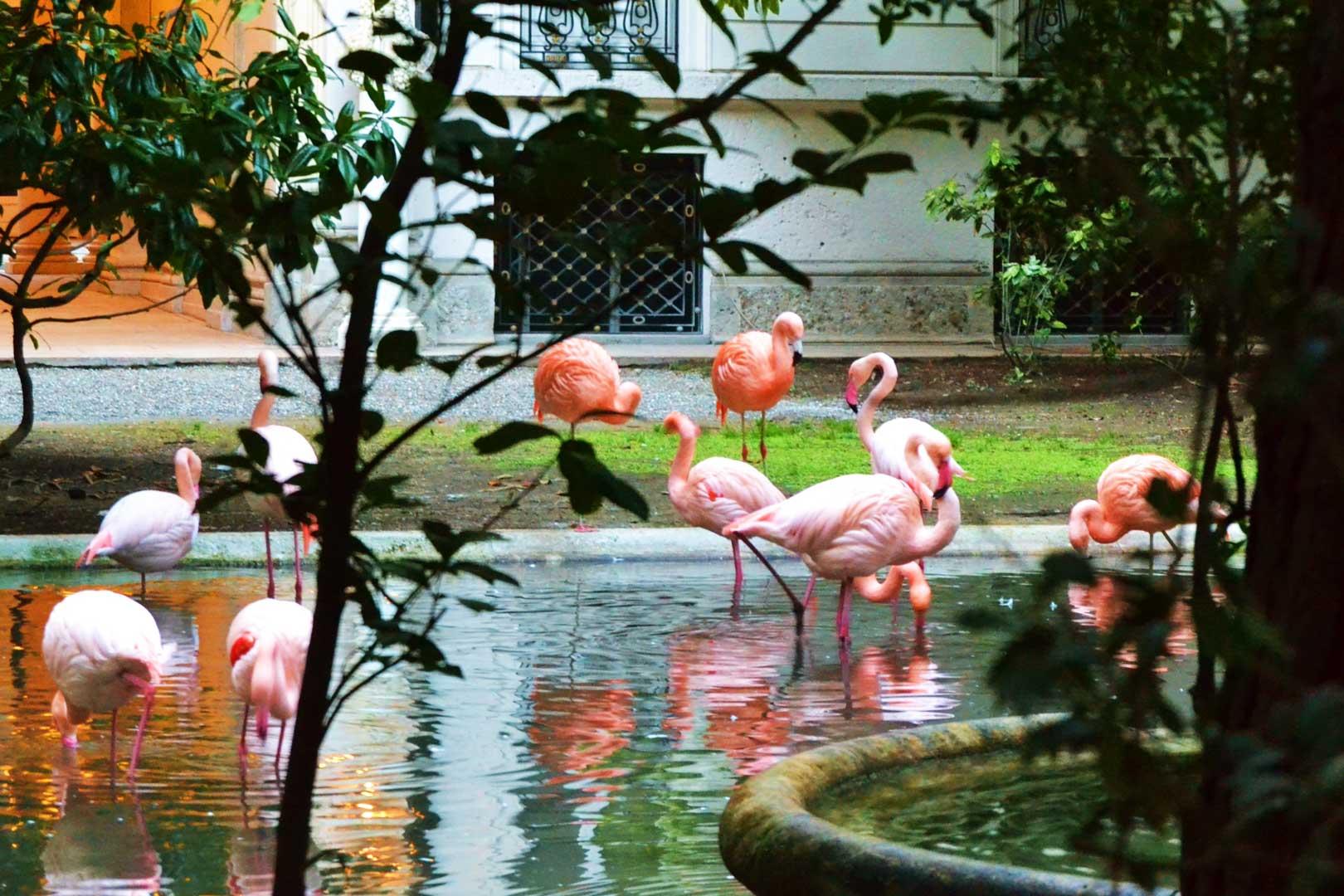 pink flamingos villa invernizzi flawless milano
