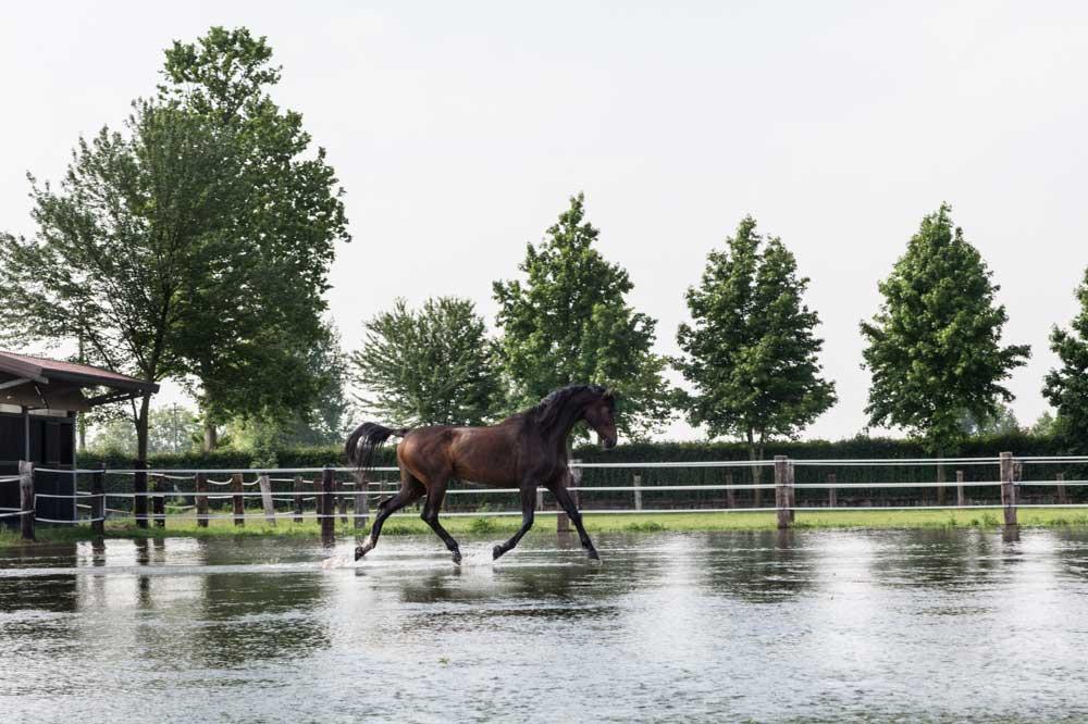 I migliori agriturismi vicino a Milano  San Giacomo Horses