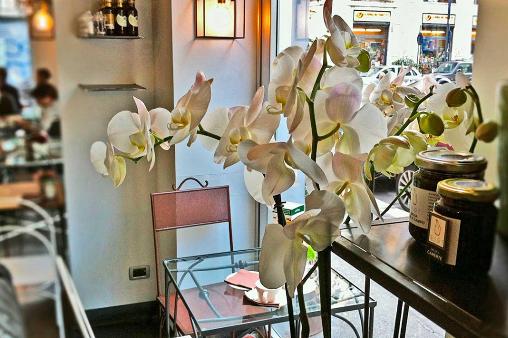 I migliori aperitivi di Porta Venezia - Mint Garden Cafe