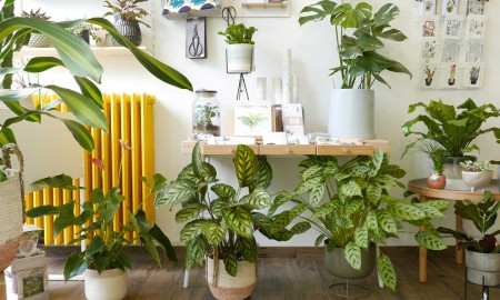 Wild Living with Plants - Milano