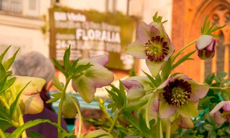 Floralia 2019 - Milano